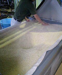小牧醸造では「日本一早い」焼酎の醸造が始まった