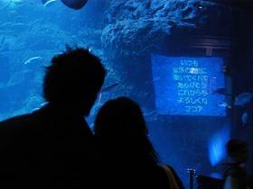 新江ノ島水族館の愛する思いを伝えるイベント「恋する水槽」(写真はイメージ)