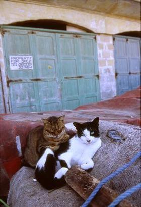 まったりくつろぐ仲良しネコ