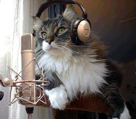この写真を見て「昔のなめ猫を思い出す」と言う人も