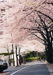 ホテルに隣接する桜坂
