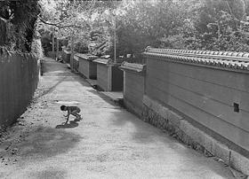 脚の折れたカマキリにエールを送る少年(1995)