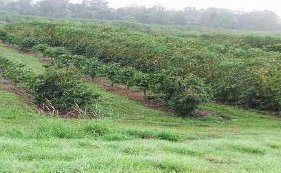 ハワイコナ地区の「ワイオノ農園」