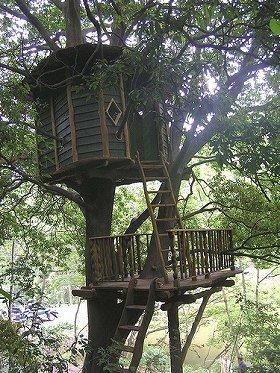 樹木と一体化しているような「ツリーハウス」  (c)Treehouse Creation
