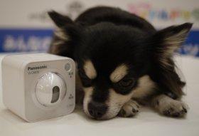 カメラに見守られて、愛犬も安心!