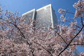 Cherry blossoms will be soon in full bloom.