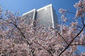 美しいアークヒルズの桜