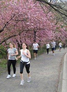 セントラルパークは花盛り
