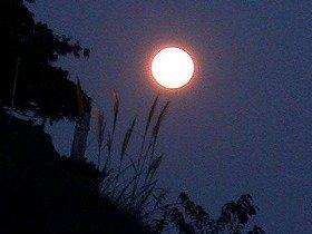 月がモテモテだ
