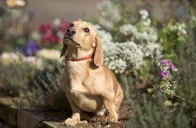 愛犬とともにハウステンボスを散策しよう