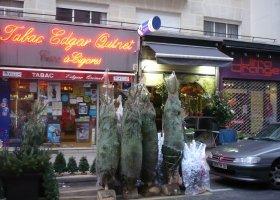 街の花屋で売られている生木のツリー