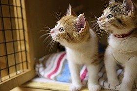 カワイイ猫がたくさん参加する予定