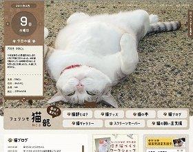 あなたの身近な猫が「アイドルにゃんこ」に