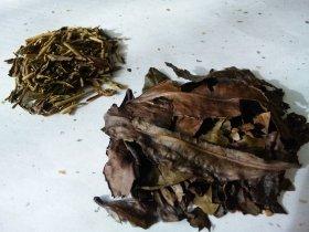 京番茶(右)の葉は焼いた落ち葉のよう。ほうじ茶(左)は緑がかって見える