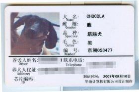 ショコラちゃんの飼い犬登録証