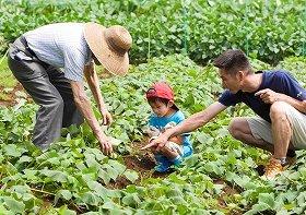 「エコ野菜」栽培を無料で体験