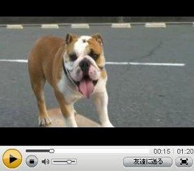 「J-CAST THE FRIDAY」にナマ出演するスケボ犬「バズーカ」