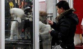「官園動物市場」