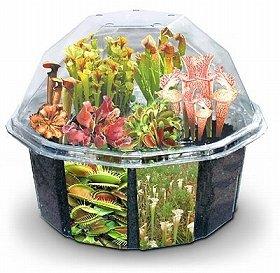 「食虫植物」育ててみる?