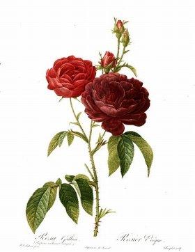 マリー・アントワネットとナポレオン妃を魅了した画家