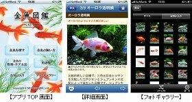 (CAP)画像は、金魚図鑑ベスト100