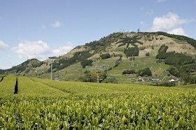 茶畑には「茶」の文字