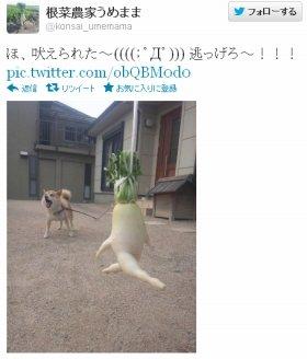 犬と遭遇した「逃げる大根」。ピンチ!