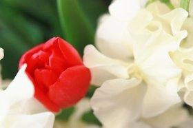 素敵な花で女性の心をつかもう(イメージ)