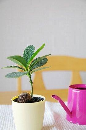 観葉植物も活きる部屋だったらいいですよね