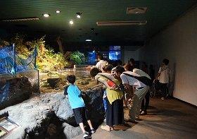 画像は夜の水族館
