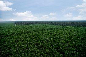 インドネシアに広がる広大な自然林