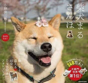 「柴犬まるさんぽ DVD付き!」(著・小野慎二郎、1404円、KADOKAWA)