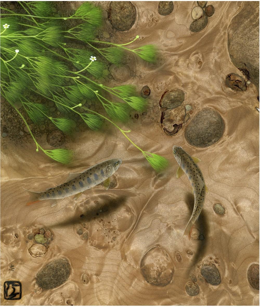 川底を覗き込んだかのような透明感 「清流 花咲く流れ」(C)Tadao Sato