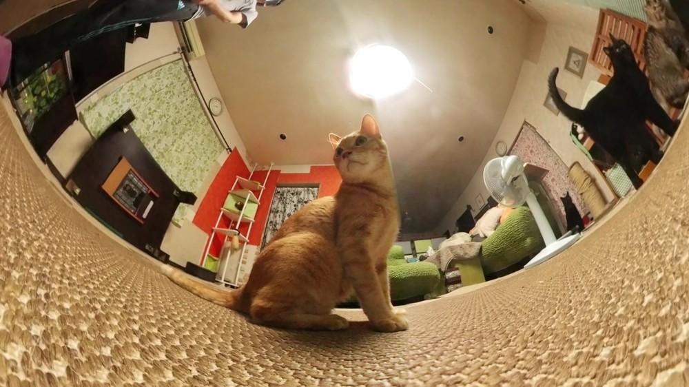 ネコ目線のパノラマ動画