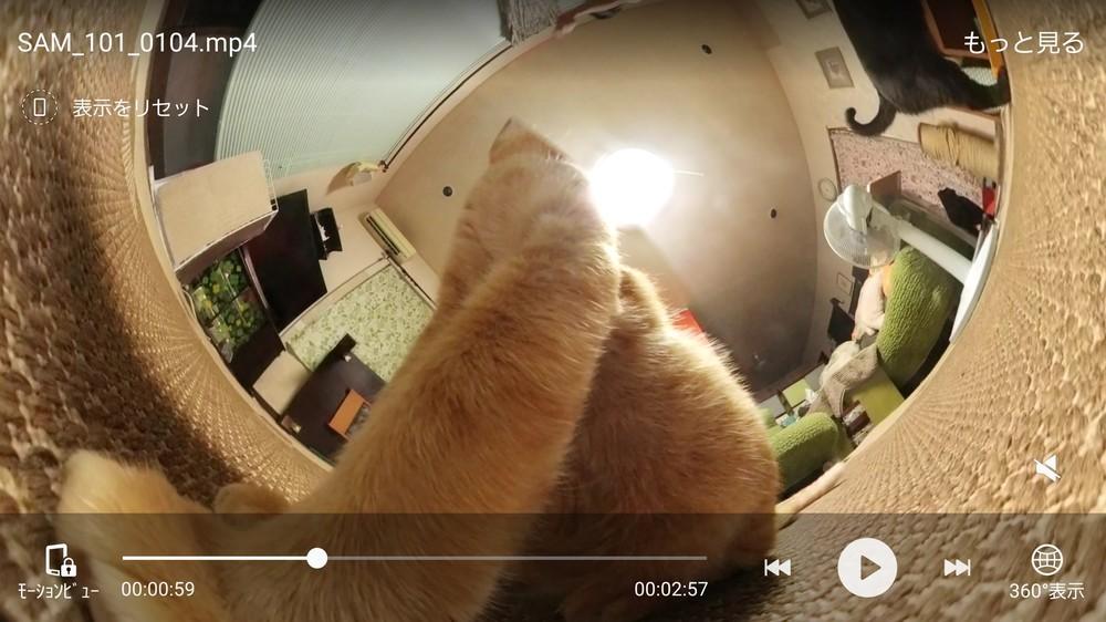 ネコがカメラに近づくとこんな絵が撮れる