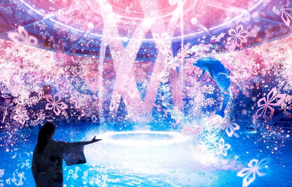 桜吹雪舞い散る中、イルカがジャンプ アクアパーク品川での「お花見体験」