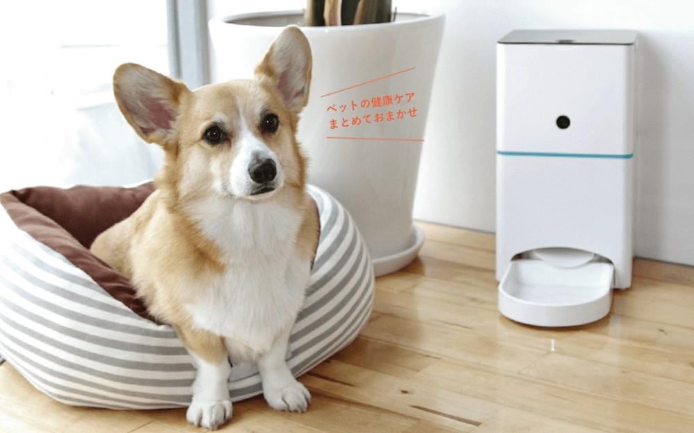 ペットの「えさやり」問題が月500円で解決! 自動給餌器「ハチたま」がレンタルサービス開始