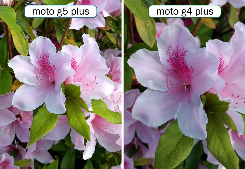 カメラ機能比較その1「晴れた日の花」