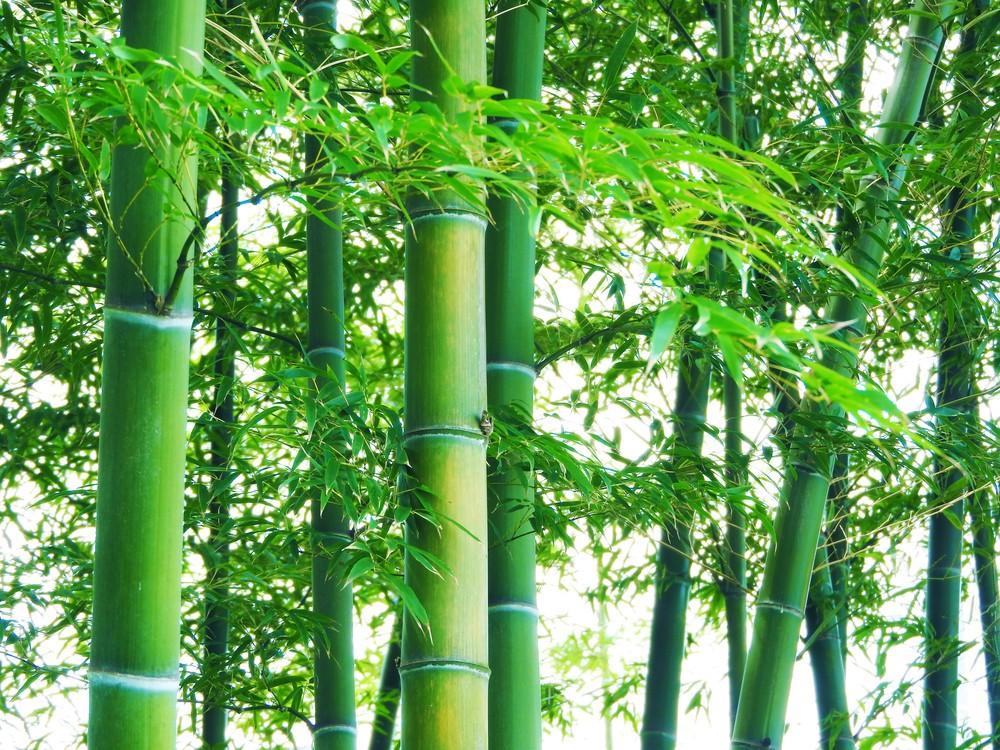 「ワロタ」「草」はもう古い 今度は「竹」がブームの予感