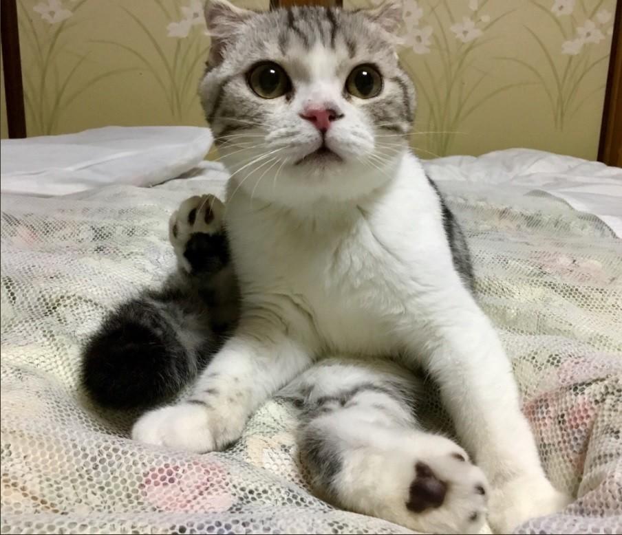 癒やされる!同じお布団でネコちゃんとお泊り 湯河原旅館に予約殺到