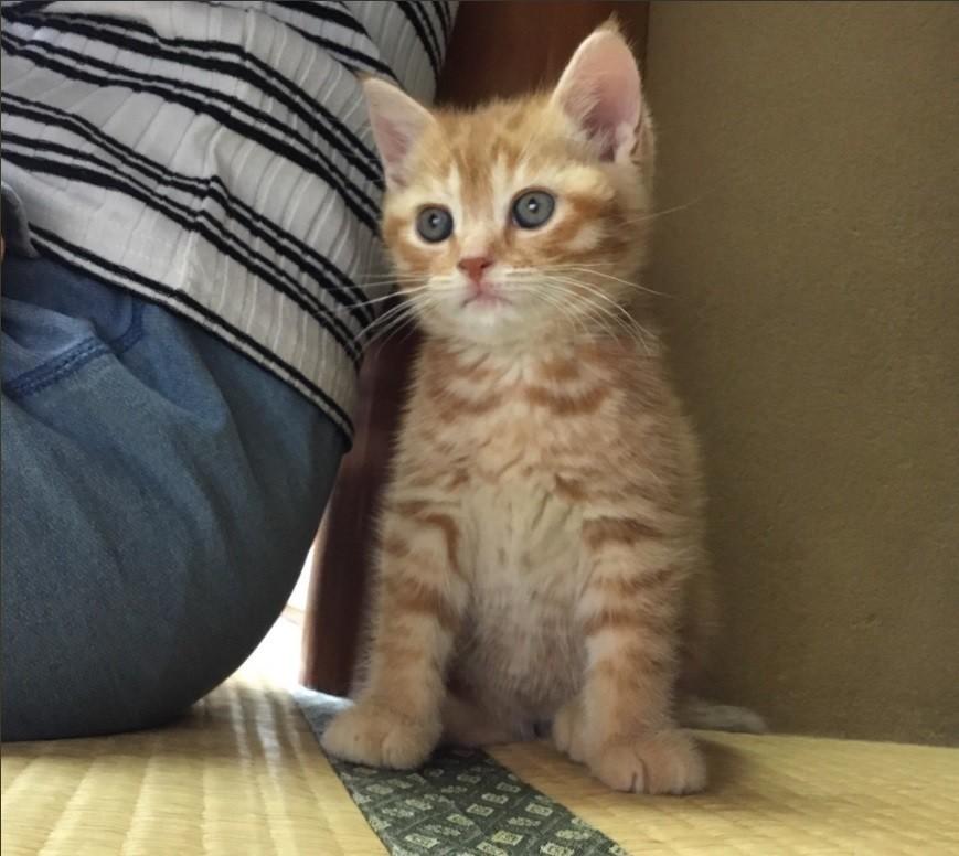 湯河原 店 まい きゃ と っ 湯河原の猫付き旅館「まいきゃっと湯河原店」がTwitterで話題 里親として世話を体験|ニフティニュース