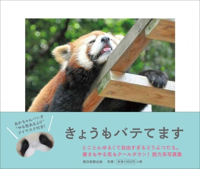 レッサーパンダ、ホッキョクグマも猛暑でぐったり 「夏バテ」動物写真集
