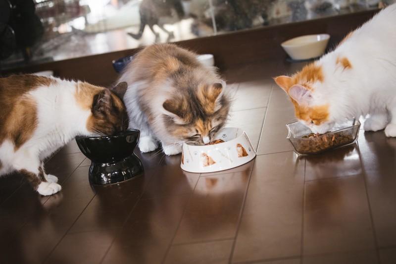 「おいしさ」とは何か 角田光代さんは愛猫に罪滅ぼしの「ちゅ~る」を