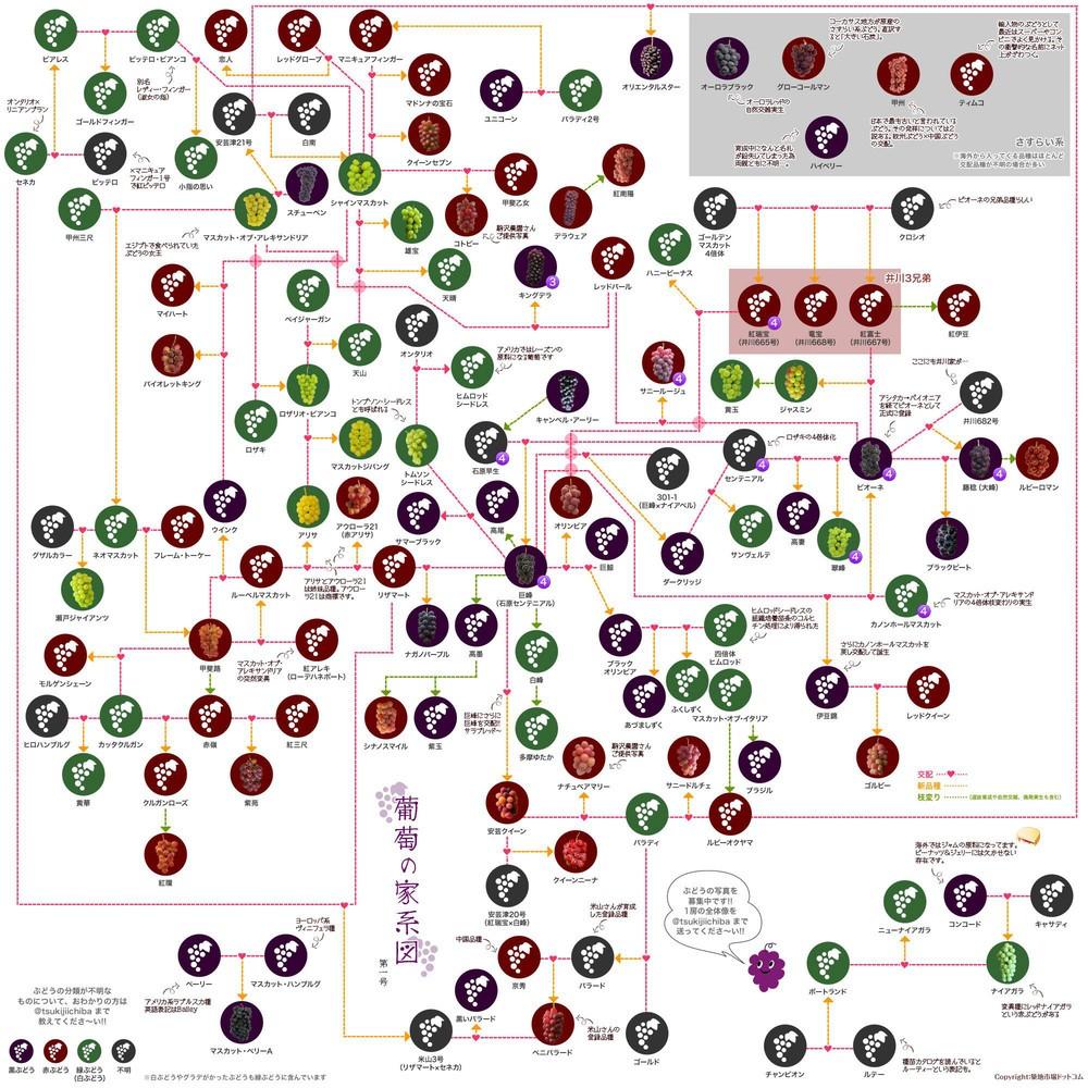 ブドウの家系図