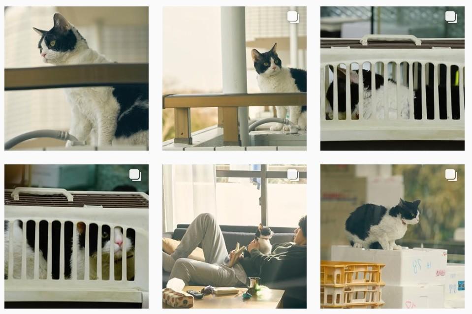 「旅猫リポート」インスタが猫まみれ 福士蒼汰×ニャンコにファン悶絶