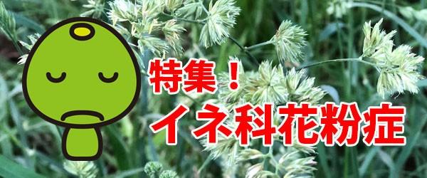 花粉症の季節まだまだ終わらない 5~6月は「イネ科雑草」にご用心