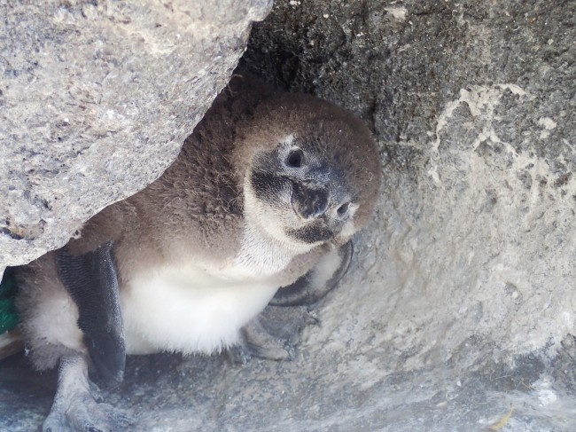 サンシャイン水族館はベビーラッシュ 今しか見られない姿や行動を見て!