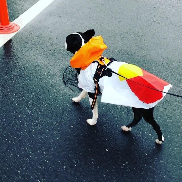 梅雨入りで外出イヤ、でも犬の散歩が... 「ペットの雨具」で飼い犬もストレス軽減