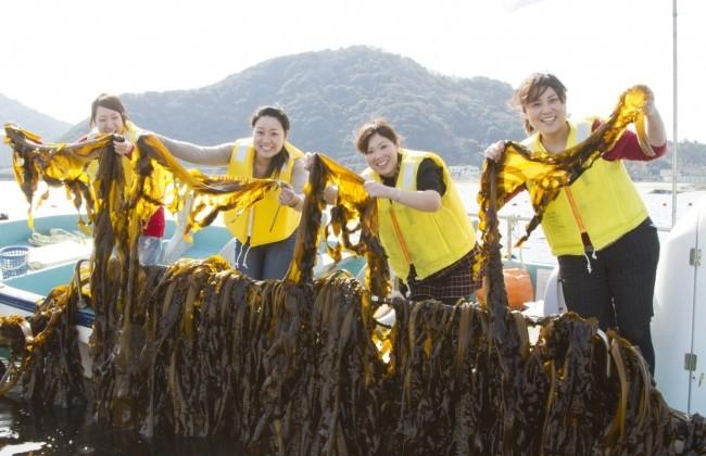 ワカメ収穫と塩蔵体験、とれたてを「しゃぶしゃぶ」に 徳島・鳴門で