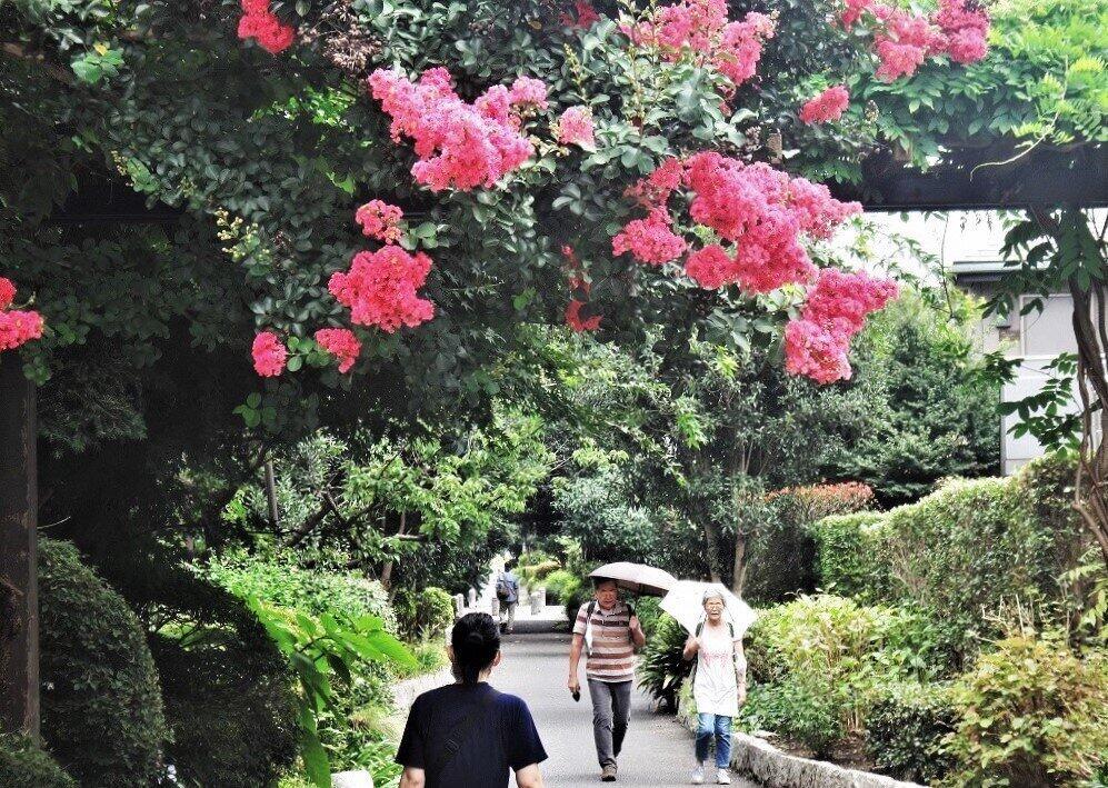 散歩で「免疫力」を高める人もいるはず=東京都杉並区で、冨永写す
